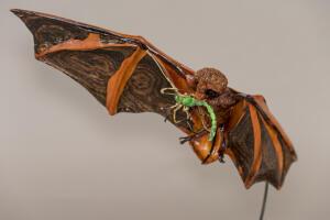 Painted Bat 4