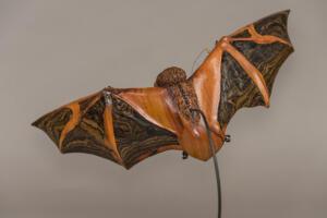Painted Bat 7