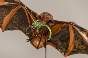 Painted Bat (Close up)